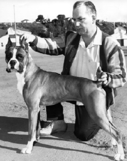 Wally Jacob, EKC Life member, Conformation Judge and CKC board member, with one of his fine Boxers. Their kennel was also well known for Kerry Blue Terriers.